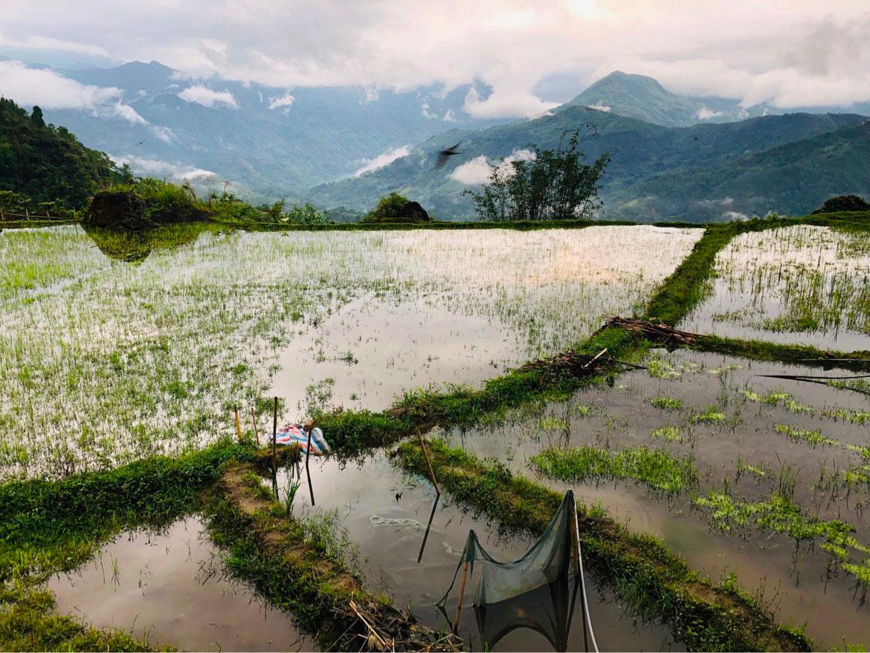 rizières-vietnam